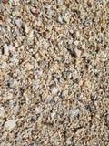 Stranden skräpas ner med skal och koraller royaltyfria foton