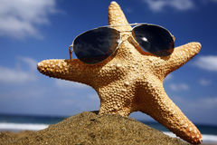 stranden skuggniner sjöstjärnan Royaltyfri Bild