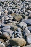 Stranden som täckas med stora grå färger, slätar kiselstenar eller stenar Royaltyfria Foton