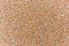 Stranden texturerar skalsand Royaltyfria Foton