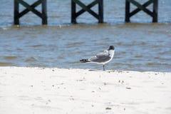 Strandfågel Arkivfoton