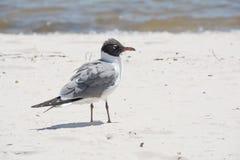 Strandfågel Royaltyfri Foto