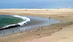 Strandfåglar fotografering för bildbyråer