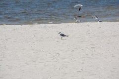 Strandfåglar Royaltyfri Fotografi