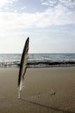 strandfjäder royaltyfria bilder
