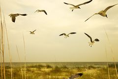 strandflyg över seagulls arkivfoto