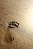 strandfotspårsolnedgång Arkivfoto