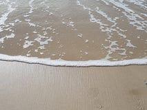 Strandfradga på bribieön royaltyfria foton