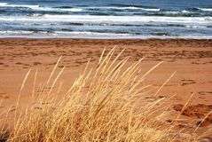 strandgräs Royaltyfri Fotografi