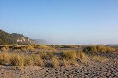 Strandgräs och sand Arkivbild