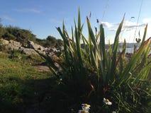 Strandgräs och sandigt vaggar Arkivbild