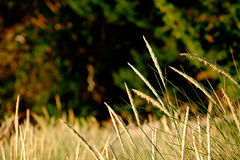 Strandgräs vid kusten Arkivfoton