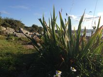 Strandgras en zandige rotsen Stock Fotografie