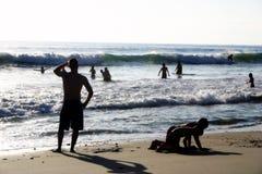 strandgyckel arkivbild