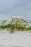 Strandhafer lizenzfreies stockbild