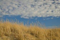 Strandhafer an einem sonnigen Tag lizenzfreie stockfotografie
