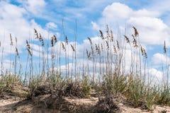 Strandhafer und Dünen bei Sandbridge Lizenzfreies Stockfoto
