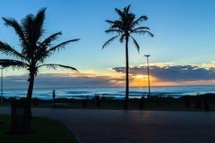 Strandhav Dawn Trees Silhouetted Royaltyfri Fotografi