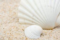 strandhavsskal Arkivfoto