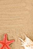 strandhavsskal Arkivbild