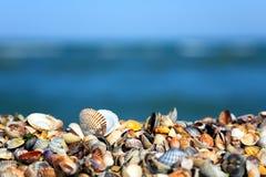 strandhavsskal Arkivbilder