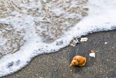 strandhavsskal Arkivfoton