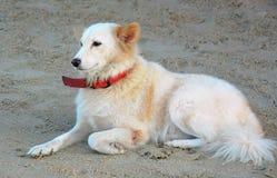 strandhund Royaltyfri Fotografi