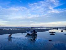 Strandhund Arkivbilder
