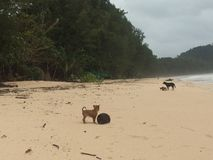 Strandhund und -welpe Lizenzfreies Stockfoto