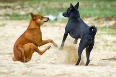 Strandhunde stockfotografie
