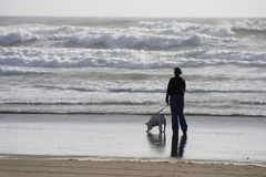 strandhundfotgängare Royaltyfri Bild