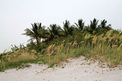 Strandinstallaties en gras Stock Foto