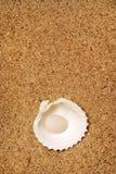 strandkamratskap Arkivfoton