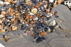 Strandkiesel mit Ebbetide Stockbild