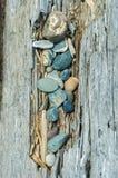 Strandkiezelstenen en drijfhoutlogboek, Brits Colombia, Canada royalty-vrije stock foto's