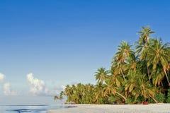 strandkokosnötön gömma i handflatan tropiskt Fotografering för Bildbyråer