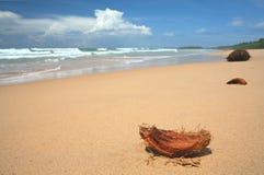 strandkokosnöt royaltyfria bilder