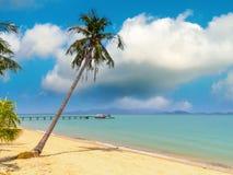 strandkokosnöten gömma i handflatan Arkivfoto