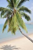 strandkokosnöten gömma i handflatan sandtreen Royaltyfri Fotografi