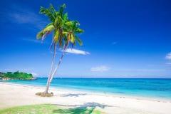 strandkokosnöten gömma i handflatan tropiskt arkivbild