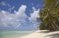 strandkokosnöten gömma i handflatan tropiskt Royaltyfri Foto