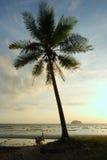 strandkokosnötlipe gömma i handflatan silhouettetreen Arkivbilder