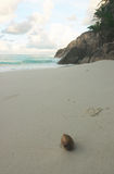 strandkokosnöt Arkivbilder