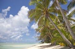 strandkokosnöten gömma i handflatan tropiskt Fotografering för Bildbyråer