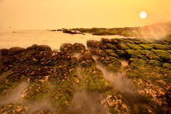 Strandlandschaft mit grüner Meerespflanze am Sonnenaufgang Lizenzfreie Stockbilder