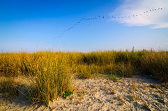 Strandlandschaftsdonau-Dreieck stockfotos