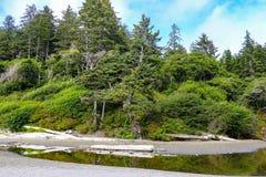 Strandlandskap i den olympiska nationalparken, Washington, USA arkivbild