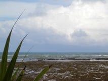 strandliggande royaltyfria foton