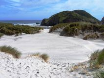 strandliggande New Zealand Royaltyfri Bild