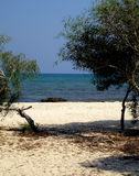 strandliopetria Arkivbilder